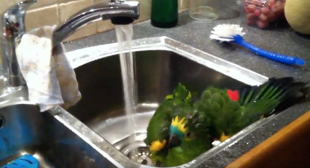Redaksjonens grønne maskot tar seg et bad!