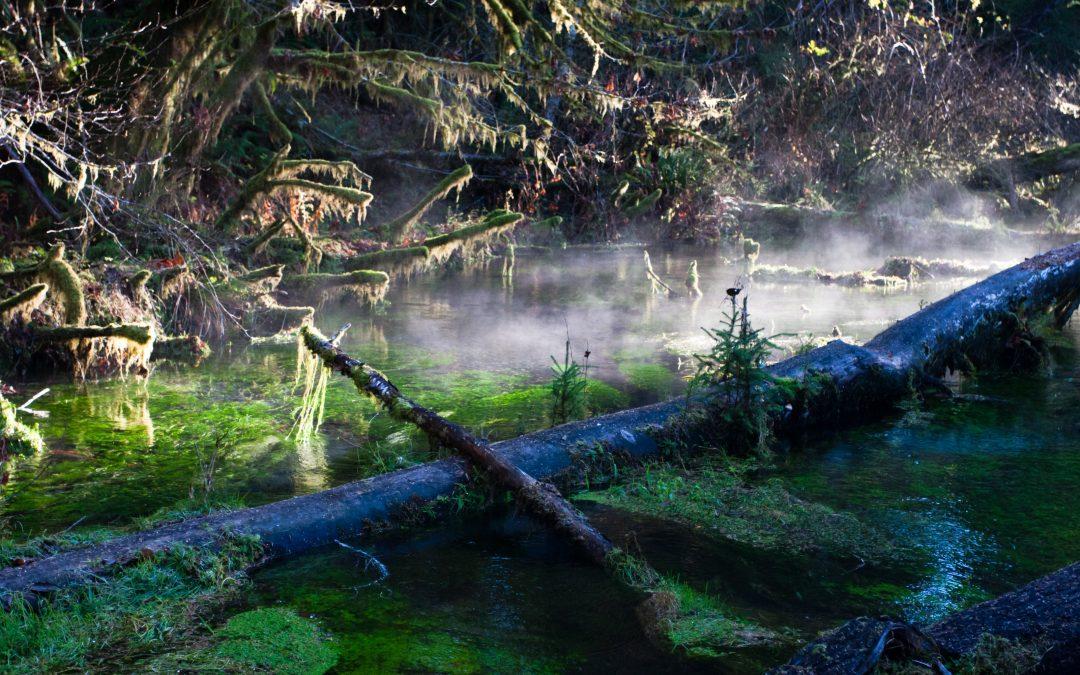 Tapet av naturlig stillhet vil være en katastrofe for menneskets sjel.