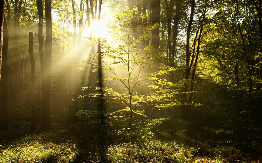 I en annen verden – en tur i den ytre og indre skog